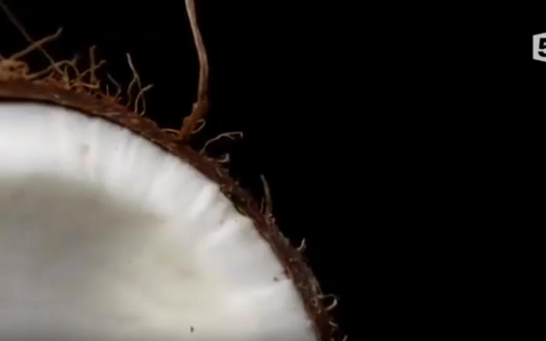 Noix de coco, le fruit du paradis – France 5